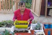 Biohuerto urbano parte del programa CISUSAT obtiene primer puesto en concurso regional