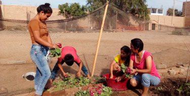 RSU – USAT realiza supervisión de Biohuertos en comunidades aledañas