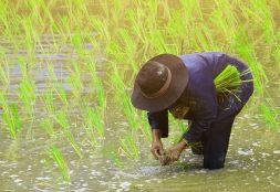 ¿Cómo ha crecido el sector agroindustrial en Lambayeque?
