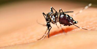 CEPGP- USAT colabora en Proyecto de Investigación sobre Zika